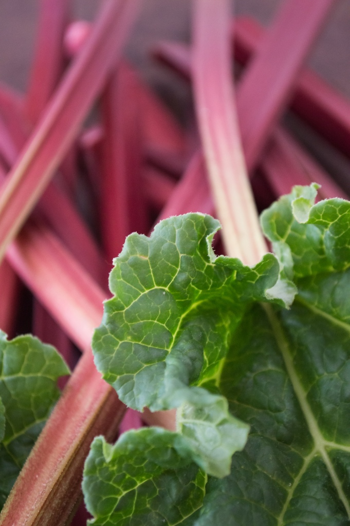 Rhubarb with leaves
