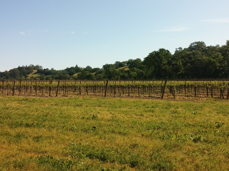 vineyard at Riverfront Park-2