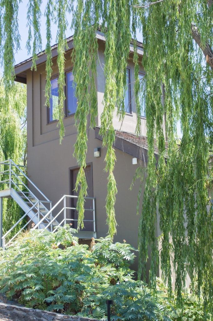 weeping willow over building | whiskandmuddler.com