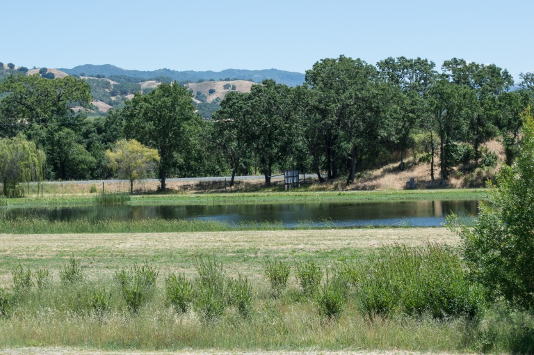 pond at saracina vineyards | whiskandmuddler.com