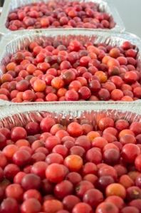 thousands of wild plums | whiskandmuddler.com