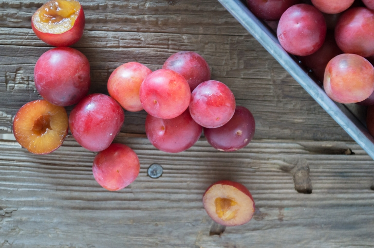 wild plums | whiskandmuddler.com