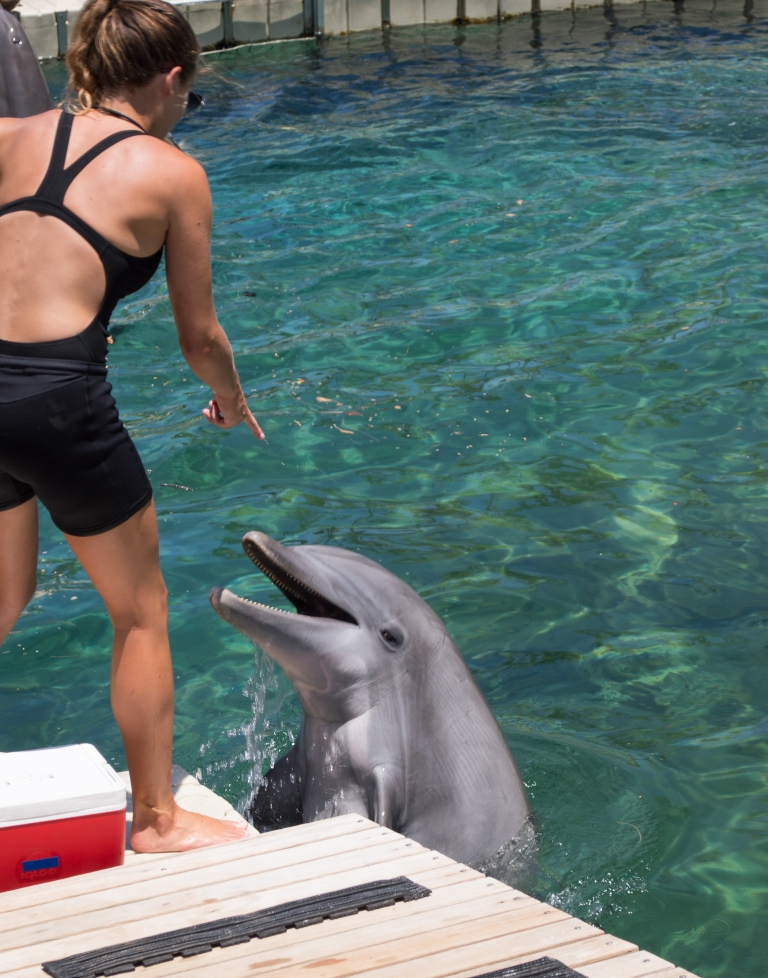 real dolphin | hilton waikoloa | whiskandmuddler.com