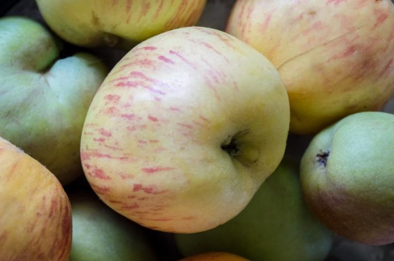 collection of antique apples | whiskandmuddler.com