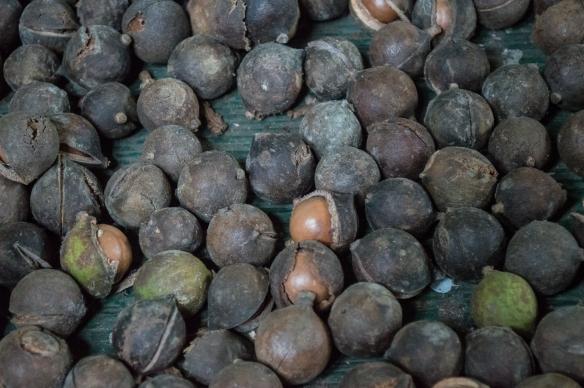 macadamia nuts | whiskandmuddler.com