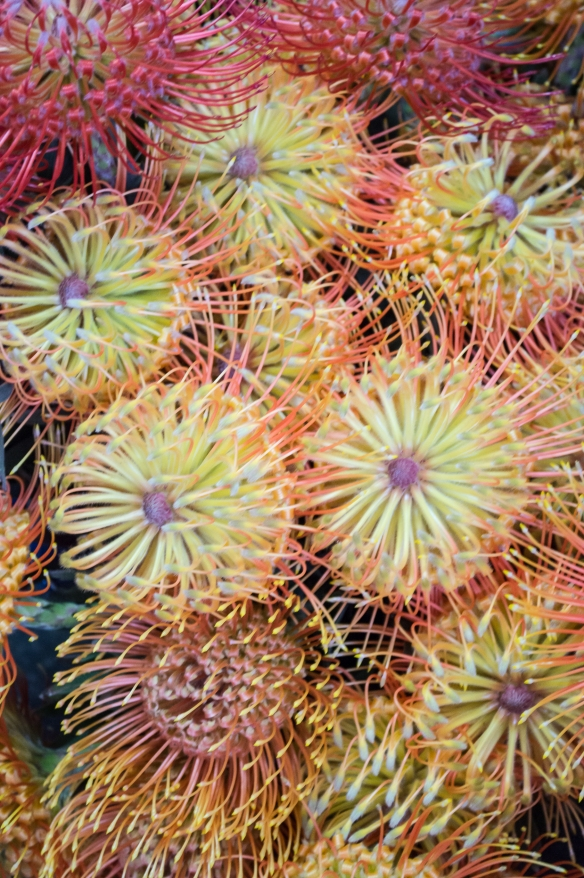 tropical protea | kona farmer's market | whiskandmuddler.com