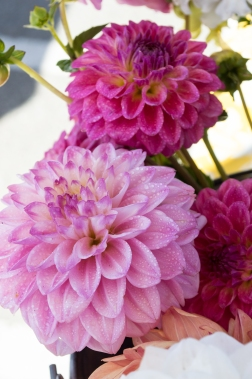 dahlias at SRCFM | whiskandmuddler.com