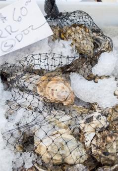 fresh oysters | SRCFM | whiskandmuddler.com