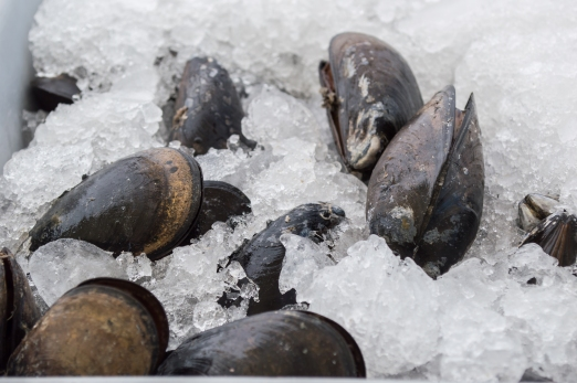 fresh mussels | SRCFM | whiskandmuddler.com