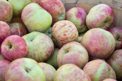 gravenstein apples | santa rosa community farmer's market | whiskandmuddler.com