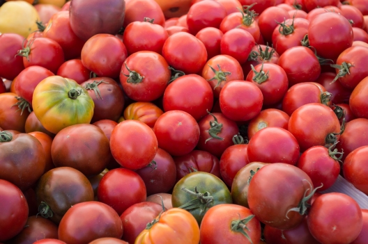 tomatoes at SRCM | whiskandmuddler.com