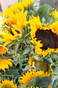 sunflowers at SRCFM | whiskandmuddler.com