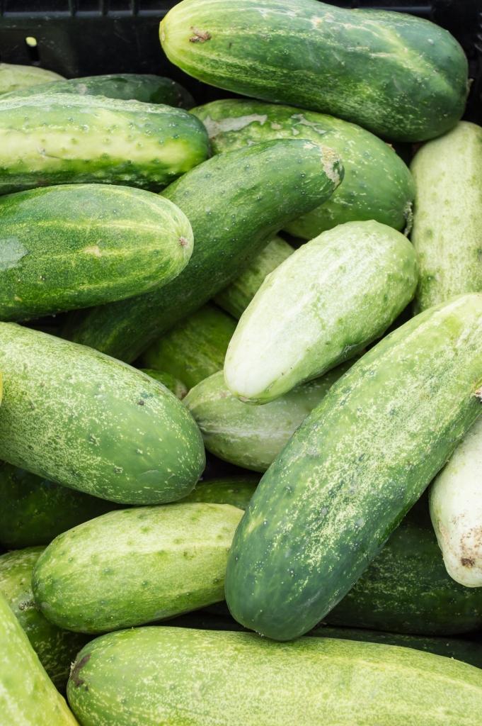 cucumbers | SRCFM | whiskandmuddler.com