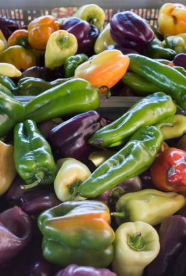 peppers | SRCFM | whiskandmuddler.com