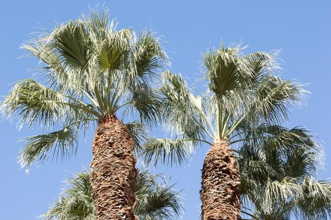 palm springs | whiskandmuddler.com