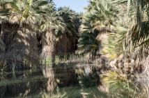down to the desert | palm springs | whiskandmuddler.com
